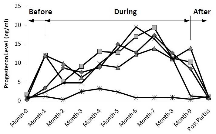 Figure 1: Progesterone levels in Bali cattle before, during and after pregnancy.