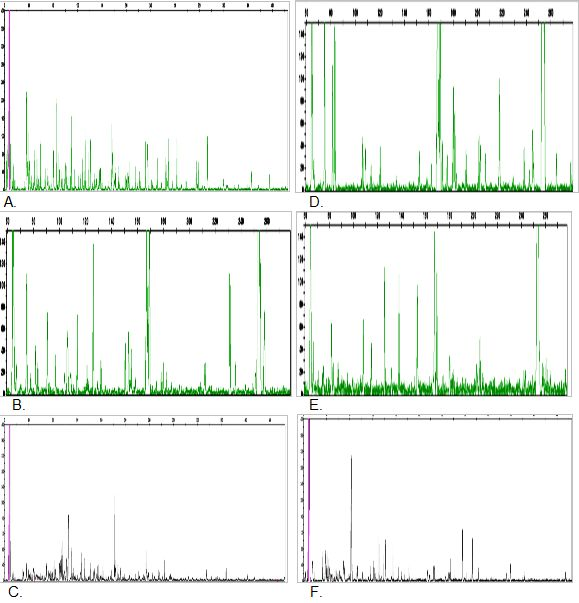 Figure 1: AFLP patterns of L. pumila var. pumila (A, B & C) and L. pumila var. alata (D, E & F) using primer pairs EACG/MCAC, EACG/MCAG and EAGC/MCAC. X-axis = base pair of alleles; Y-axis = intensity of alleles.