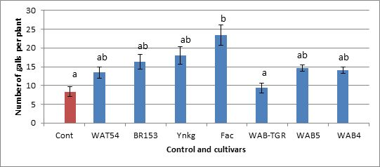 Fig. 4. Number of galls per plant recorded for the second batch of seven cultivars.