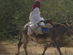 Photo 1: L'âne, un moyen de transport très pratique chez les nomades sahéliens de la steppe.